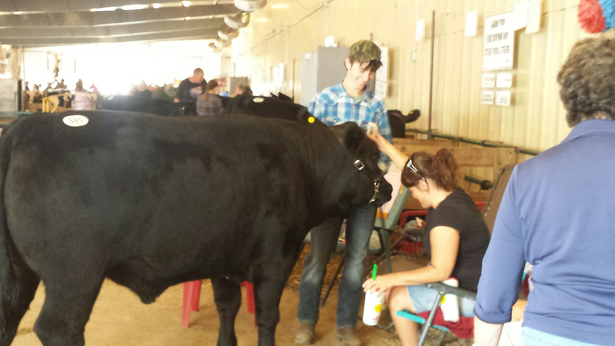 2016 steer pool carcass show august 18 2016 hartford for Pool show 2016